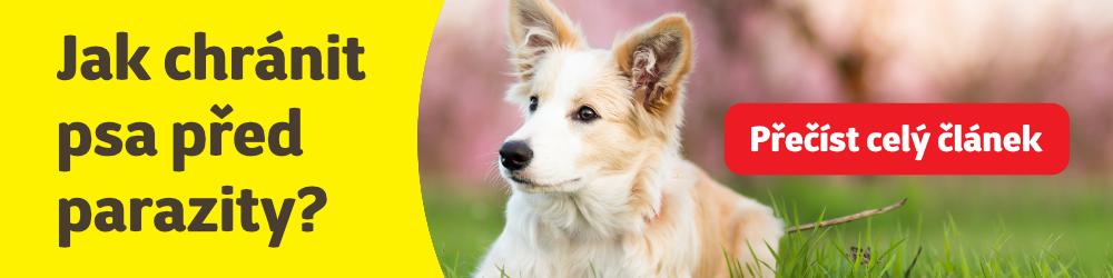 Jak chránit psa před parazity