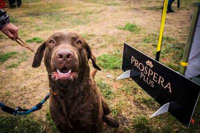 Dog Fest foto 11