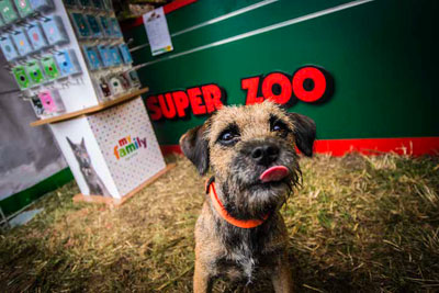 Dog Fest foto 12