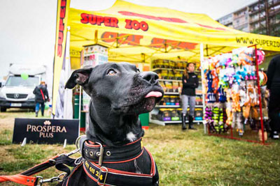 Dog Fest foto 14