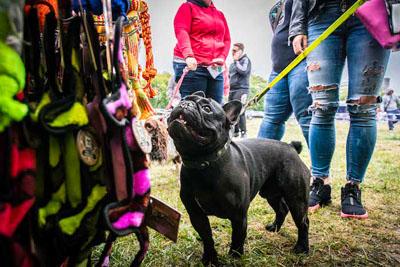 Dog Fest foto 16