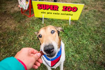 Dog Fest foto 18