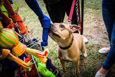 Dog Fest foto 19