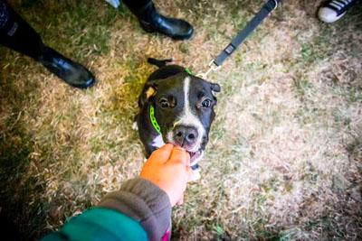 Dog Fest foto 22