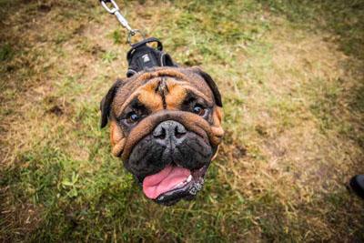 Dog Fest foto 23