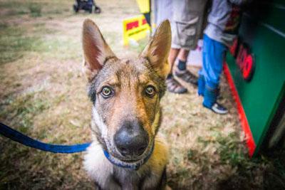 Dog Fest foto 25