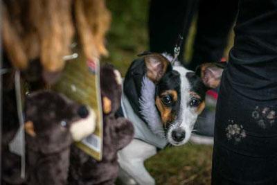 Dog Fest foto 27