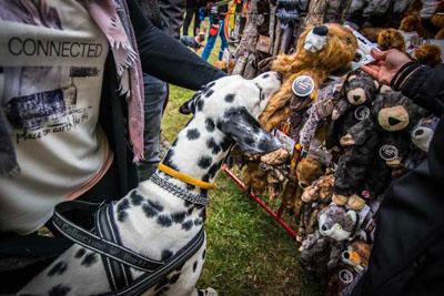 Dog Fest foto 2