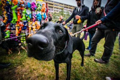 Dog Fest foto 34