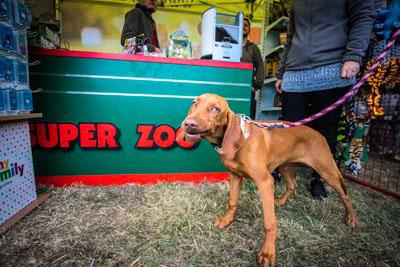 Dog Fest foto 35