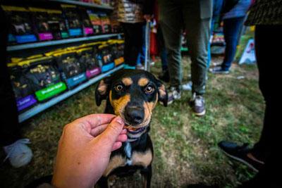 Dog Fest foto 36