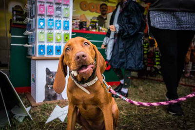 Dog Fest foto 37