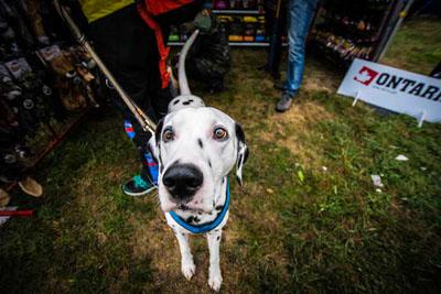 Dog Fest foto 39