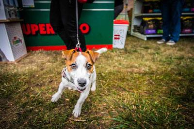 Dog Fest foto 3