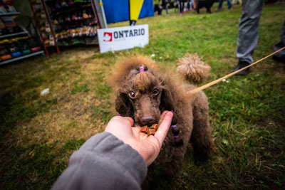 Dog Fest foto 43