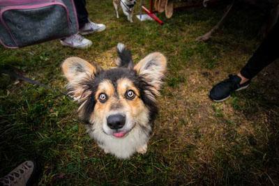 Dog Fest foto 44