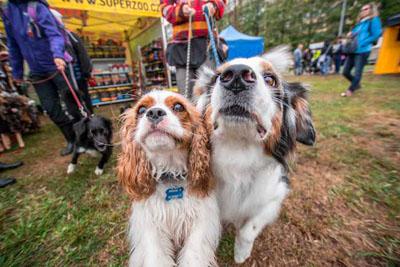 Dog Fest foto 46