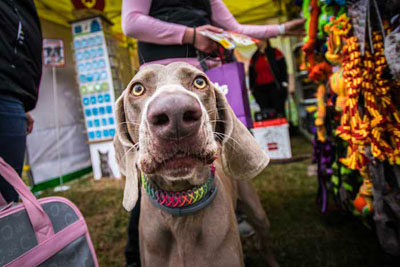 Dog Fest foto 47