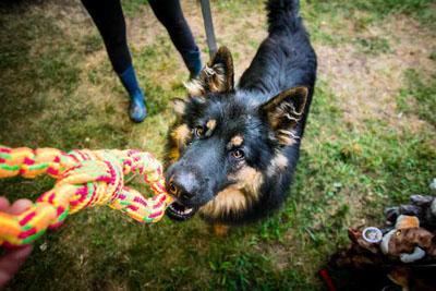 Dog Fest foto 48