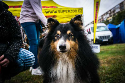 Dog Fest foto 49