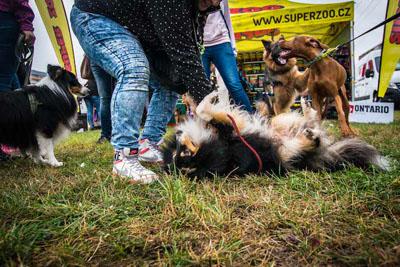 Dog Fest foto 50