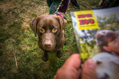 Dog Fest foto 51