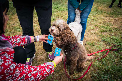Dog Fest foto 53