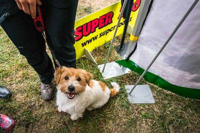 Dog Fest foto 54