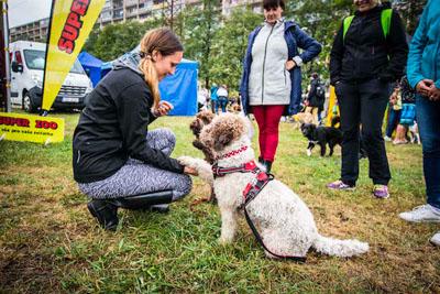 Dog Fest foto 56