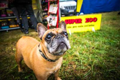 Dog Fest foto 5