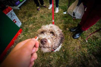 Dog Fest foto 6