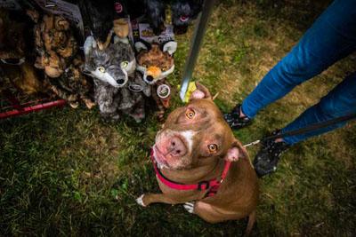 Dog Fest foto 7