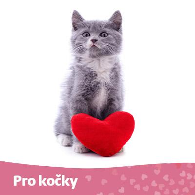 Kočka - tip na valentýna