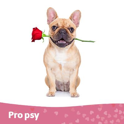 Pes - tip na valentýna