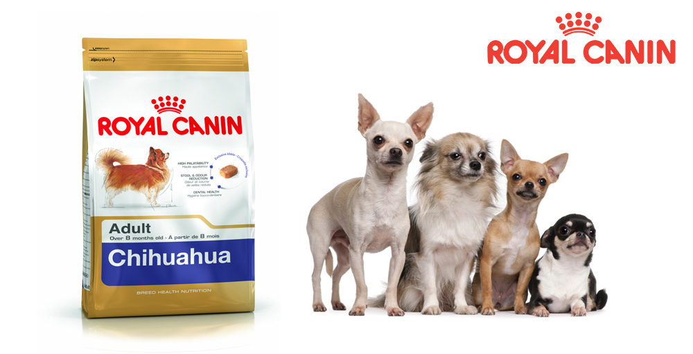 royal canin chihuahua ivava adult 500g super zoo. Black Bedroom Furniture Sets. Home Design Ideas