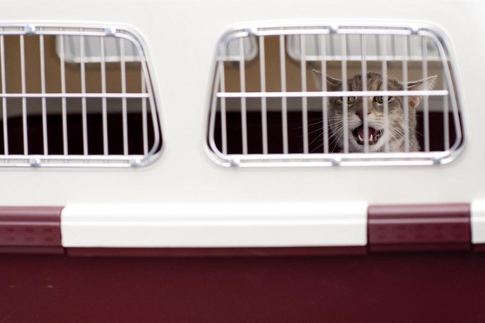 kočka v přepravce