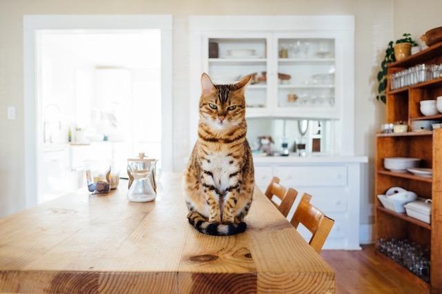 Vyberte si krmivo na míru pro potřeby svého malého tygra