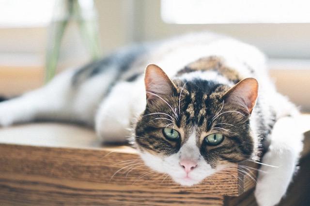 Kočka je výhradně masožravec