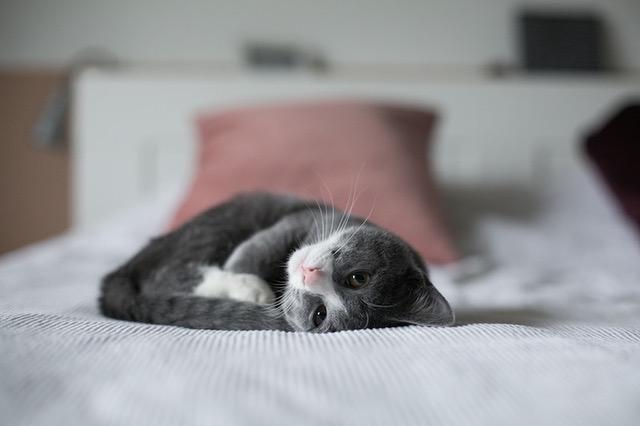 Kvalitní krmivo potřebuje kočka již od koťátka