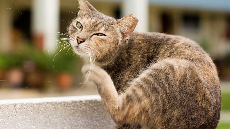kočka se škrábe
