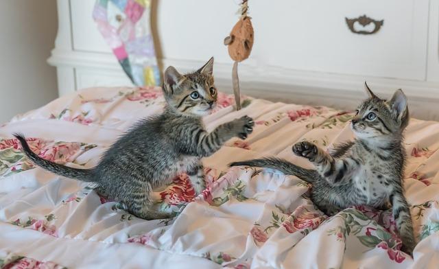 koťata si hrají s myškou