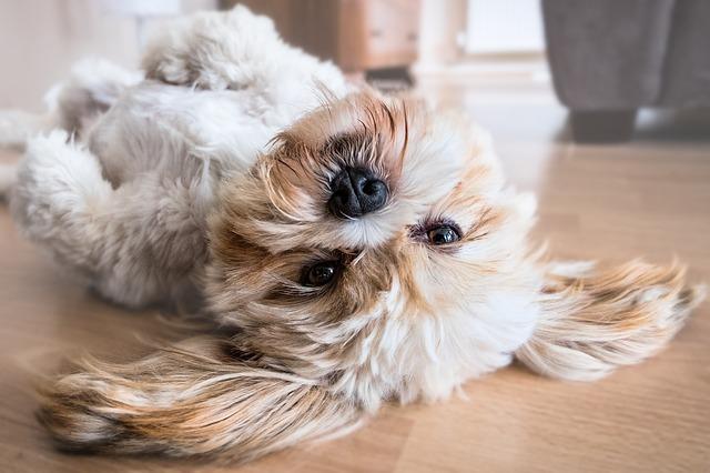 pes se válí před česáním