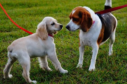 pes očichává jiného psa