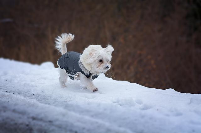 pes v teplém oblečku