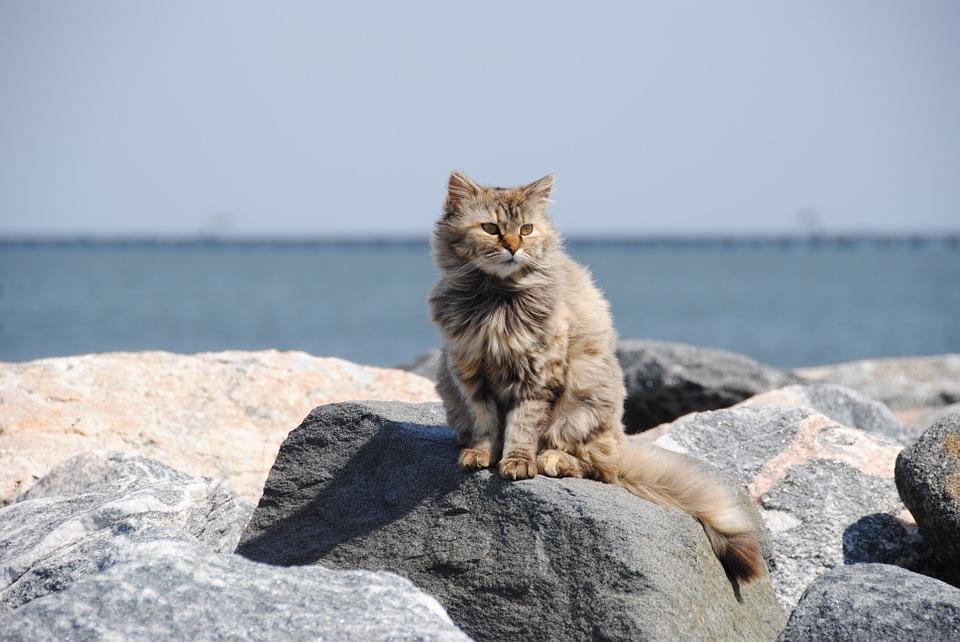 kočka u moře