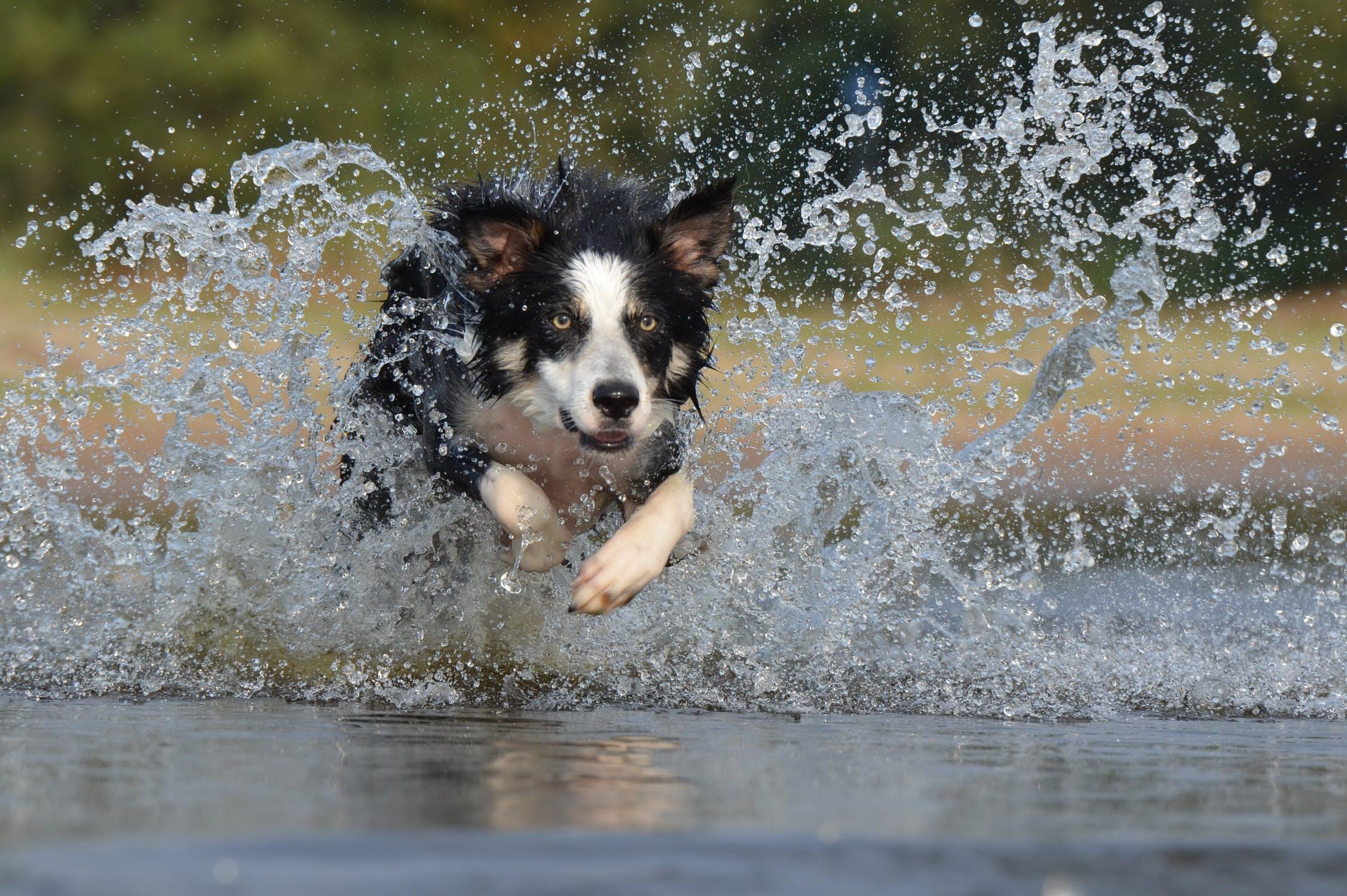 Spousta psů vodu miluje
