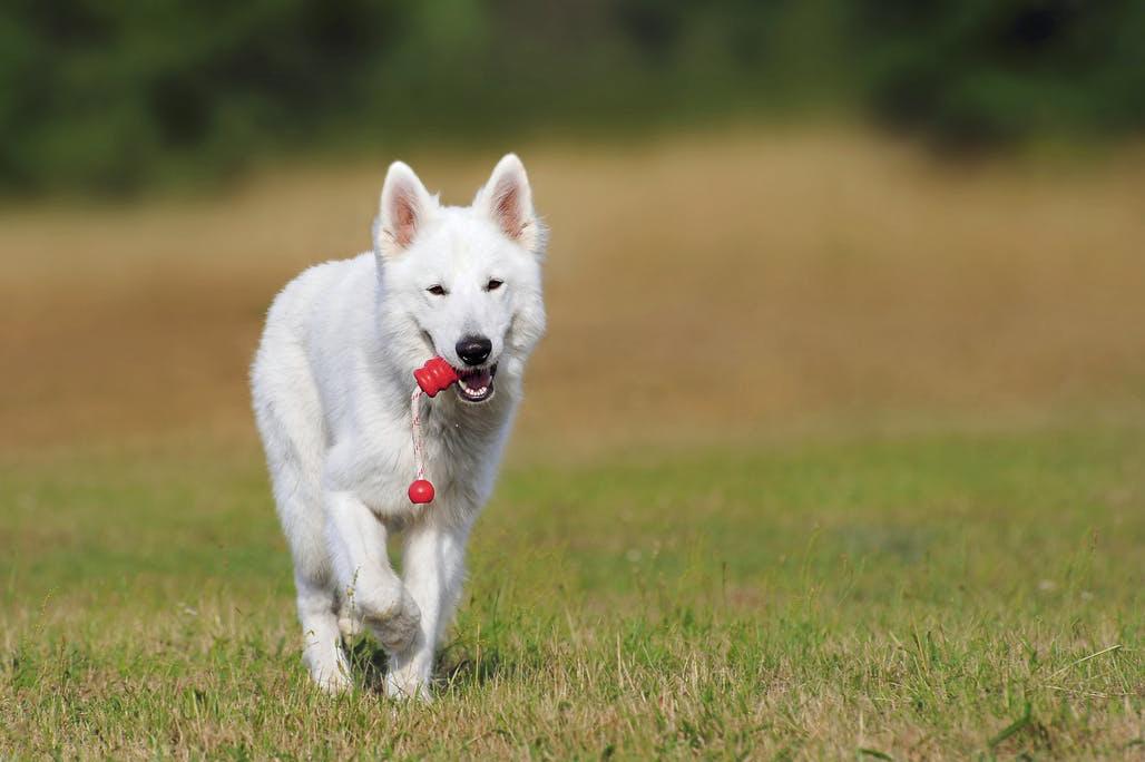 Aport také patří mezi oblíbené zábavy psů
