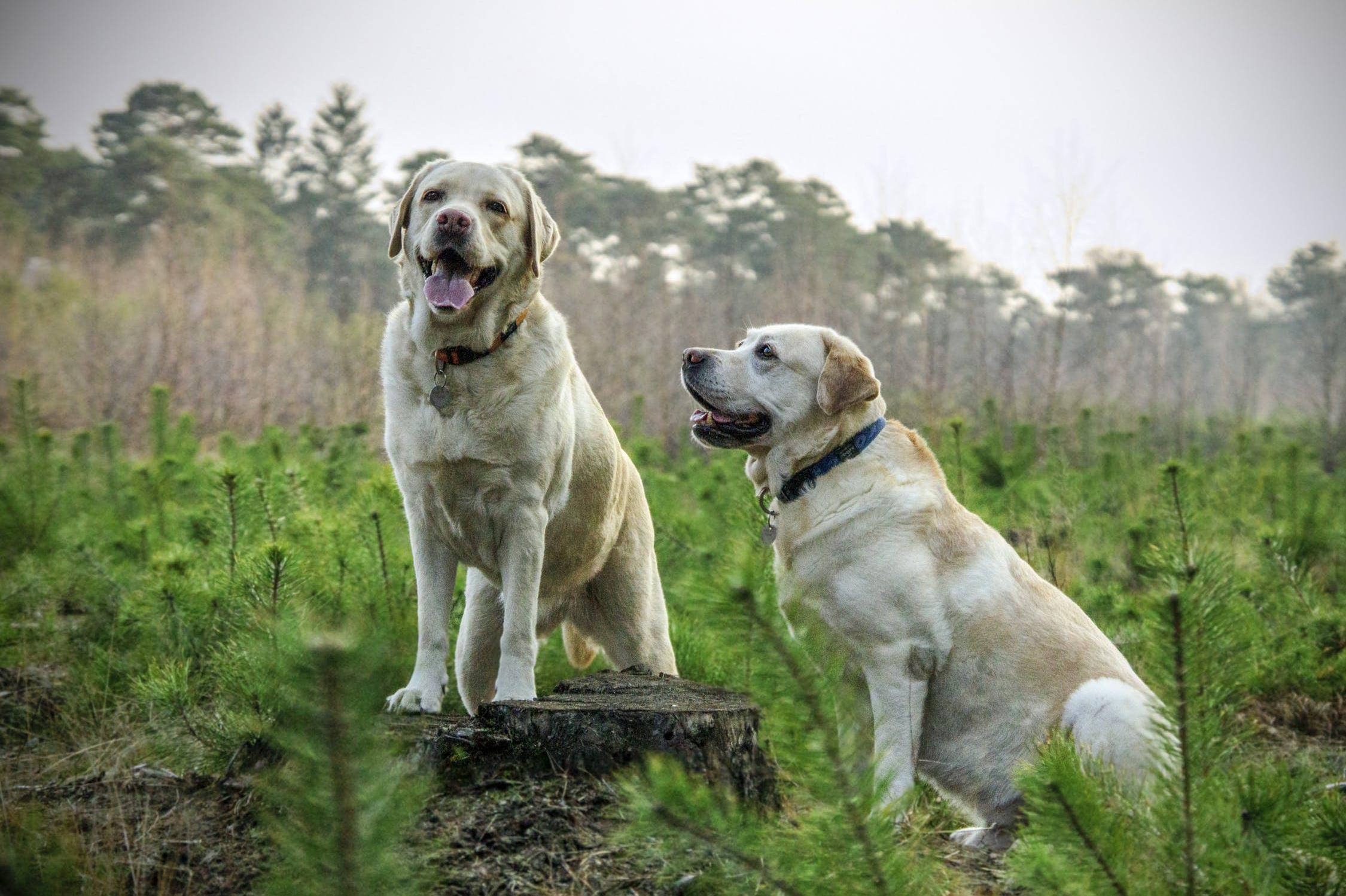 Každý pes má rád pohyb a aktivitu se svým pánem