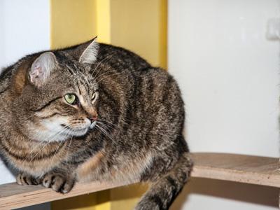 Kočičí domov Sluníčko - Foto 1