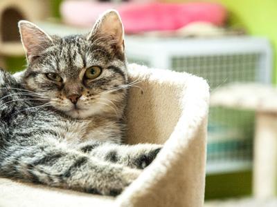 Kočičí domov Sluníčko - Foto 2